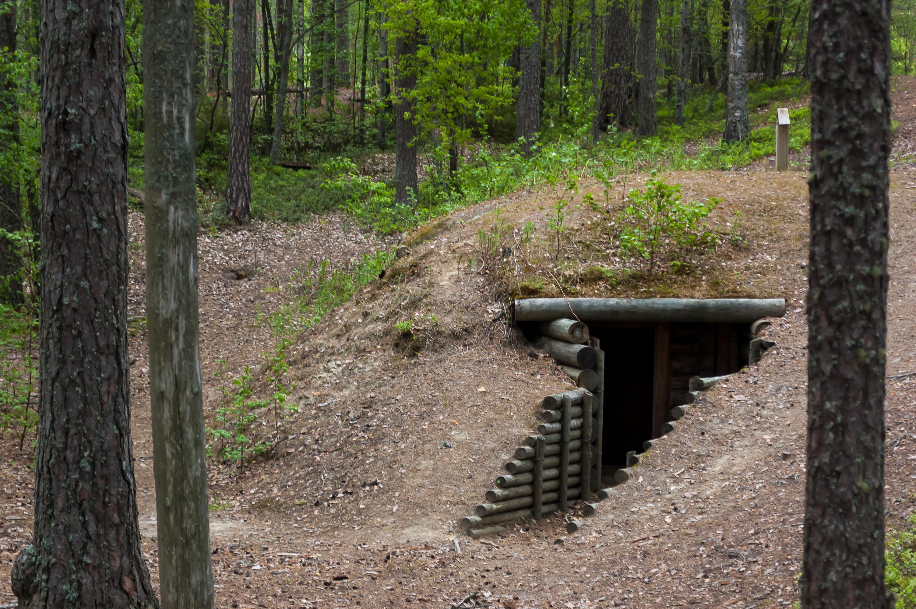 дизайнеры леса тверской области фото окопов могут распечатать