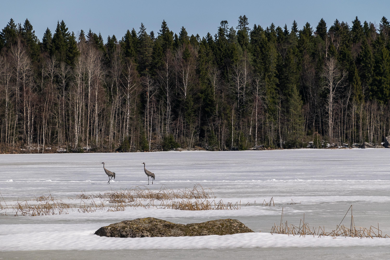 Pilvilampi Lake And Vaasa Water Supply Pohjoiseen
